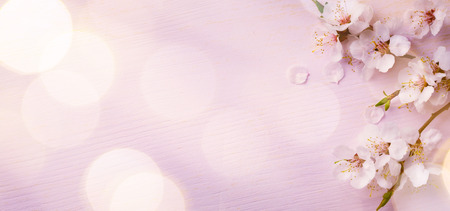 Photo pour Spring border background with pink blossom - image libre de droit