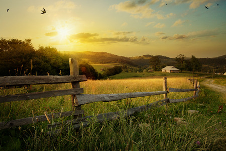 Foto per art rural landscape. field and grass - Immagine Royalty Free