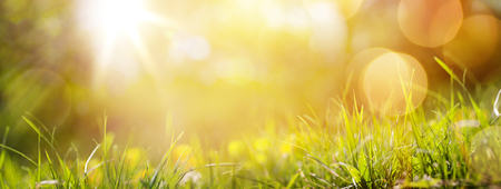 Photo for art abstract spring background or summer background with fresh grass - Royalty Free Image