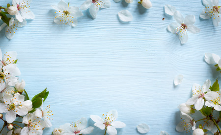 Photo for Spring border background with white blossom - Royalty Free Image