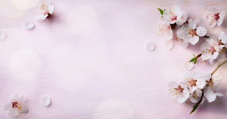 Photo for art Spring Blooming; spring flowers on wooden background - Royalty Free Image