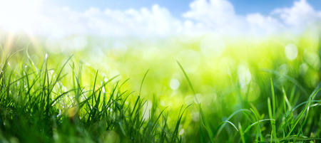 Photo pour art abstract spring background or summer background with fresh grass  - image libre de droit