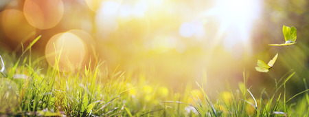 Foto de art abstract spring background or summer background with fresh grass and butterfly - Imagen libre de derechos