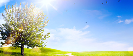 Photo for Spring landscape; Easter background with blooming spring tree - Royalty Free Image