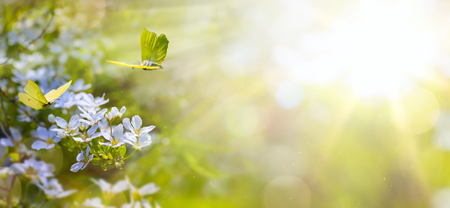Foto de Easter spring flower background; fresh flower and yellow butterfly on green background - Imagen libre de derechos