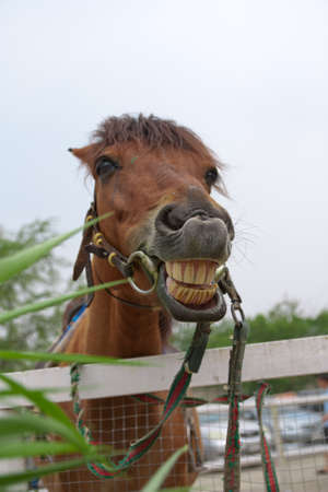 Horse with a sense of humor