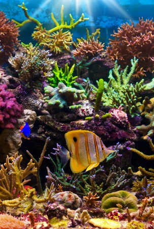 tropical fish on a coral reef