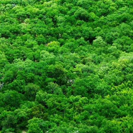 Aerial shot of tree tops - abstract texture background