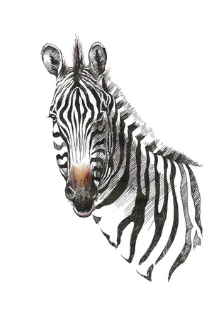 Illustration pour Watercolor zebra isolated on white background - image libre de droit
