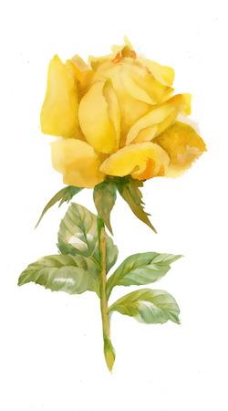 Ilustración de Watercolor yellow rose - Imagen libre de derechos
