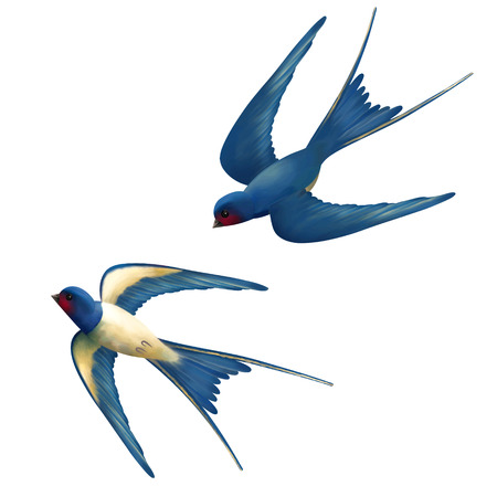 Illustration pour Vector two flying swallows on white background - image libre de droit