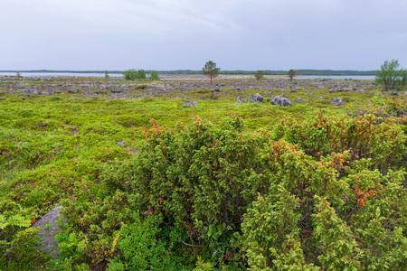 Photo for Muksalma Island. Solovetsky archipelago, White Sea Coast, Russia - Royalty Free Image
