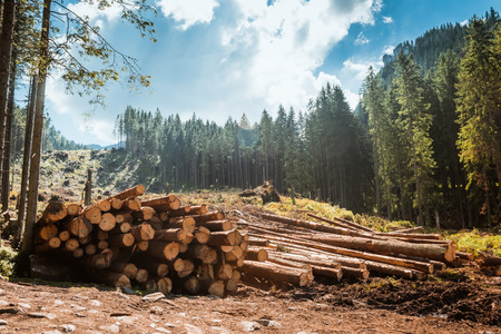 Photo pour Log stacks along the forest road, Tatry, Poland, Europe - image libre de droit
