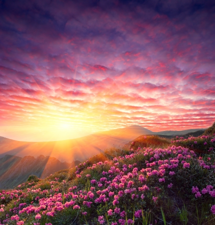 Photo pour Spring landscape in mountains with Flower of a rhododendron and the sky with cloud - image libre de droit