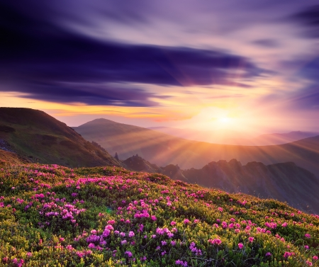Spring landscape with a beautiful sunset in the mountains and rhododendron flowers