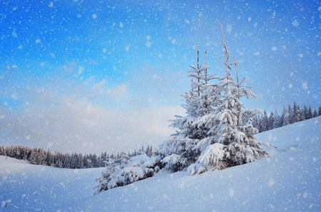 Photo pour Snow-covered fir tree in a mountain valley  Christmas landscape - image libre de droit