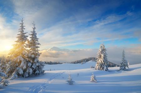 Photo pour Winter in the mountains. Christmas landscape on a sunny morning. Carpathians, Ukraine, Europe - image libre de droit