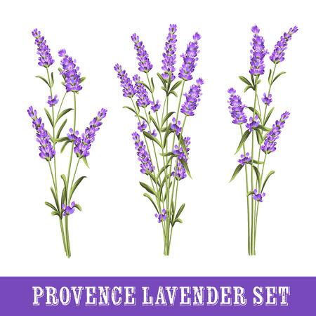 Ilustración de Set of lavender flowers elements. Collection of lavender flowers on a white background. Vector illustration bundle. - Imagen libre de derechos