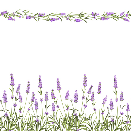 Illustration pour The Lavender Seamless frame line. Bunch of lavender flowers on a white background. Vector illustration. - image libre de droit