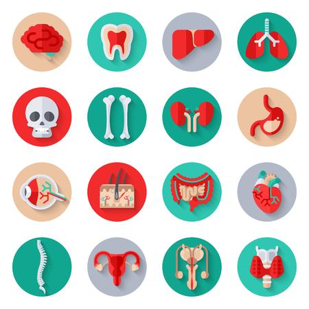 Illustration pour Human Internal Organs Flat Icons on Circles Set. - image libre de droit