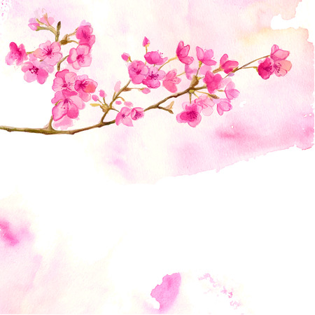 Illustration pour Pink background with branch of cherry blossom. Vector watercolor illustration of sakura. - image libre de droit