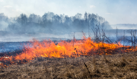 Photo for Close up view at dry grass burning in forest fire - Royalty Free Image