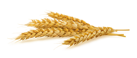 Photo for Horizontal wheat ears isolated on white background as package design element - Royalty Free Image