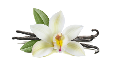 Photo pour Vanilla flower, pods, leaves isolated on white background, horizontal composition - image libre de droit