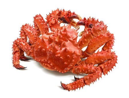 Photo for Kamchatka king crab isolated on white background, back view - Royalty Free Image