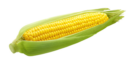 Foto de Fresh ear of corn isolated on white background as package design element - Imagen libre de derechos