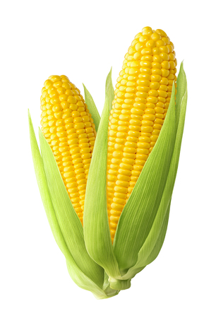 Foto de Sweet corn ears isolated on white background as package design element - Imagen libre de derechos