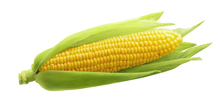 Foto de Single ear of corn isolated on white background as package design element - Imagen libre de derechos