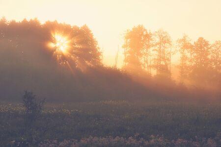 Foto de Sunrise in the country. Sun shining through a tree. Foggy summer morning. - Imagen libre de derechos