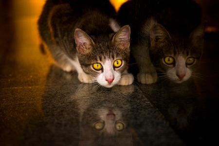 Foto de Reflection of cat while looking for food,and light at sunset - Imagen libre de derechos