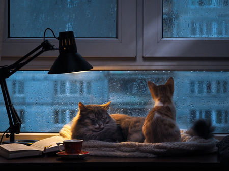 Cats in the window. Outside, rain, water drops on the glass. Twilight shines a desk lamp. It should be a cup with a drink, it is an open book. Cozy and warm. Small kitten looking in the window at the rain and drops on glass