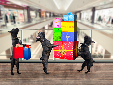 Photo for Dogs in the Mall. Are a lot of gifts and purchases - Royalty Free Image
