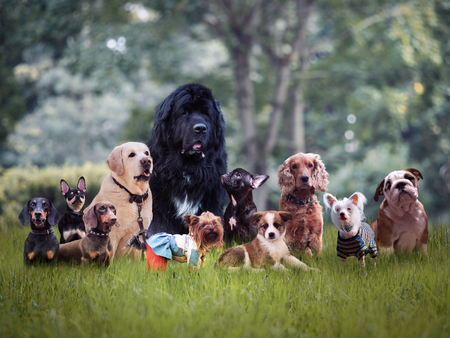 Photo pour Many different breeds of dogs on the grass - image libre de droit