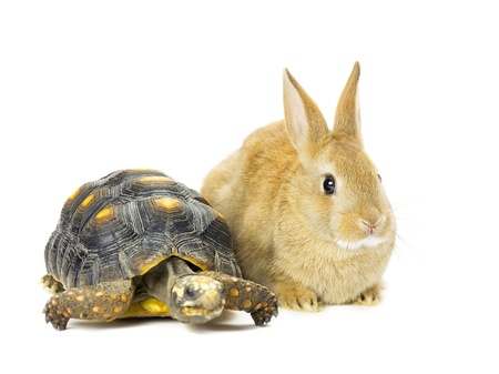 Rabbit and turtle in a close-up image