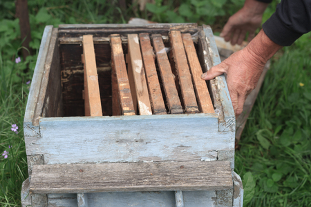 Photo for An experienced beekeeper inspects an old empty beehive with frames inside, close view - Royalty Free Image