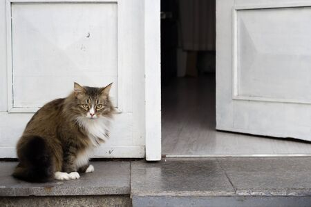 Photo for Brave fat cat guarding a white door, standing in front, copy space, hope you brought a wine, welcome - Royalty Free Image