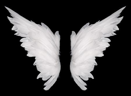 Foto de white wing isolated  on dark background  - Imagen libre de derechos