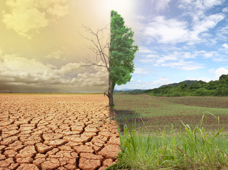 Foto per creative concept image compare of global warming. - Immagine Royalty Free