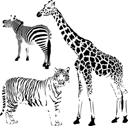 Illustration for African striped and spotty animals, giraffe, zebra and tiger stencil - Royalty Free Image