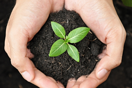 Photo for Hands holding young plant with soil - Royalty Free Image