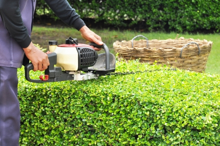 Foto de A man trimming hedge with trimmer machine - Imagen libre de derechos