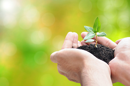 Photo for Hand holding sprout with soil, environment conservation concept - border design with copy space - Royalty Free Image