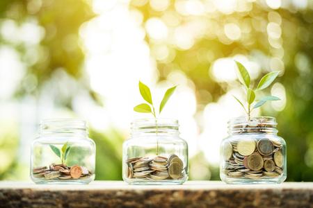 Foto de Young plant growing in the glass jars that have money (coins) - savings and investment concept - Imagen libre de derechos