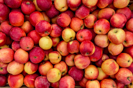 Photo for Closeup shot of fresh red and yellow apples - Royalty Free Image