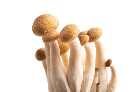 Photo for Shimeji mushrooms isolated on white background - Royalty Free Image