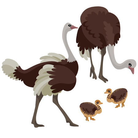 There are two ostriches with two their children in cartoon style